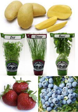 Fresh Produce, Spring Gifts and April Specials at For Goodness Sake Natural Foods