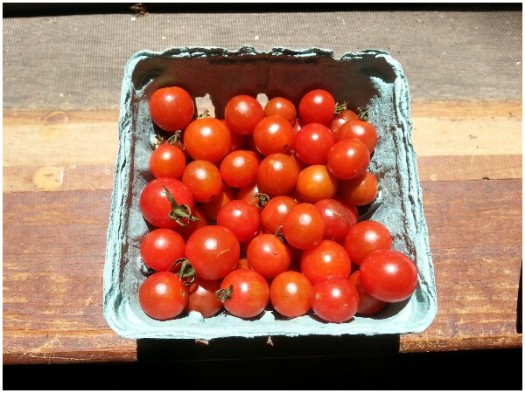 Freshly Picked Local Cherry Tomatoes from Patomack Farms in Loudoun County Virginia